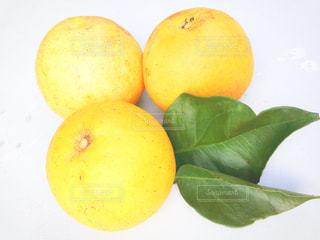 食べ物,黄色,葉,フルーツ,果物,イエロー,グレープフルーツ,ビタミン,酸っぱい