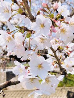 近くの花のアップの写真・画像素材[1791295]