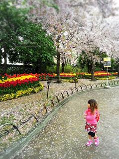 春,桜,季節,チューリップ,お花見,色,多色,色・表現
