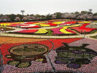 春,季節,チューリップ,お花見,アンパンマン,色,多色,色・表現