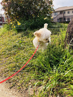 草の中に立っている犬の写真・画像素材[1852411]