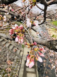木からぶら下がって花の写真・画像素材[1867489]