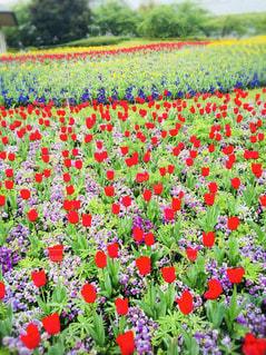 庭の赤い花の写真・画像素材[1884749]