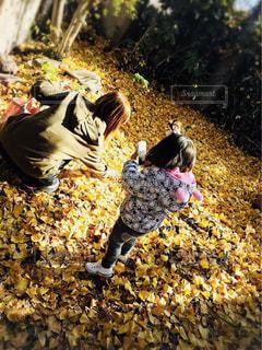 公園,屋外,女の子,落ち葉,人物,人,イチョウ,銀杏,銀杏の木,ミルクティー色