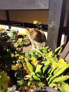 自然,屋外,昼寝,草花,ねこ,休憩,野良猫,日向ぼっこ,ミルクティー色
