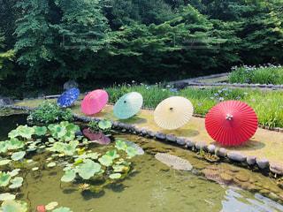 背景に水のある庭の写真・画像素材[2233550]