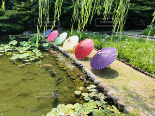 背景に水のある庭の写真・画像素材[2233567]