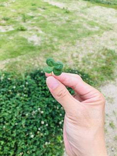 緑の葉を持つ手の写真・画像素材[2277118]