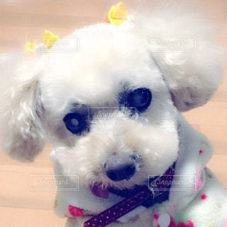 犬のクローズアップの写真・画像素材[2279511]