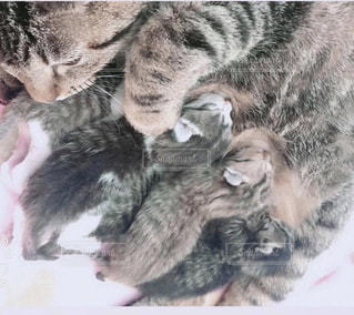 地面に横たわる猫の写真・画像素材[2291318]