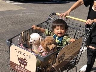 小さな子供とカートに座っている犬の写真・画像素材[2701013]