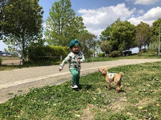 草の中に立っている小さな男の子の写真・画像素材[3141274]