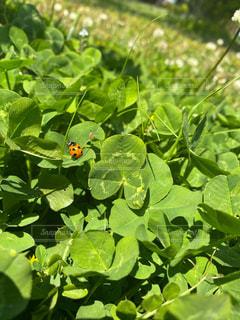 緑豊かな畑のクローズアップの写真・画像素材[3141291]