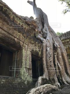 樹木の威力の写真・画像素材[969140]