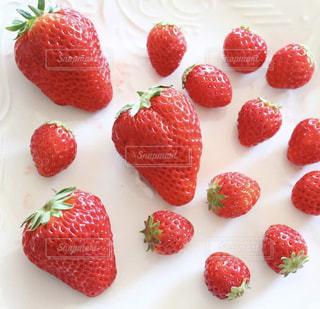 赤,いちご,苺,フルーツ,果物,可愛い,甘い,美味しい,新鮮,フレッシュフルーツ