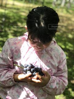 子ども,ピンク,紫,手,女の子,フルーツ,果物,果実,葡萄,小学生,果樹園,巨峰,葡萄狩り,葡萄園