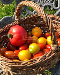 赤,ミニトマト,プチトマト,フルーツトマト,フレッシュフルーツ,フレッシュトマト