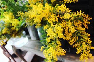 黄色,ビタミンカラー,ミモザ,イエロー,色,お花屋さん