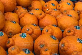 食べ物,黄色,オレンジ,フルーツ,いっぱい,熊本,健康,ビタミンC,柑橘類,シール,複数,栄養,デコポン,凸凹,ポンカン