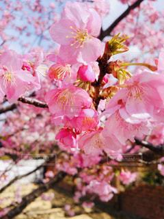 近くの花のアップの写真・画像素材[1790771]