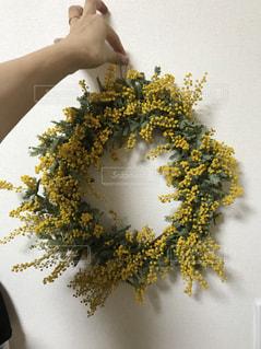 自然,花,春,屋内,花束,黄色,鮮やか,樹木,ミモザ
