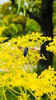自然,屋外,黄色,景色,鮮やか,草
