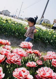 満開のチューリップ🌷の中てくてく歩く男の子の写真・画像素材[1986444]
