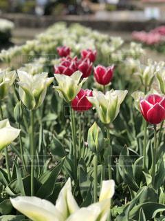 花のクローズアップの写真・画像素材[2141570]