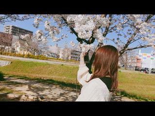 自然,風景,公園,春,桜,屋外,花見,少女,草,人物,人