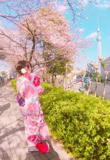 桜,着物,着物とサクラ
