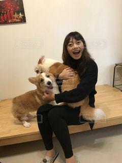 犬,コーギー,愛犬