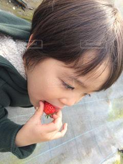 いちご,苺,フルーツ,果物