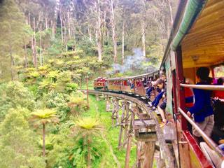 外国,旅行,オーストラリア,鉄道,海外旅行,メルボルン,パッフィンビリー鉄道