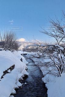 近く雪に覆われた木のアップの写真・画像素材[1831061]