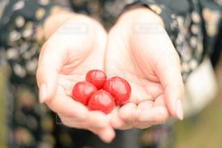 自然,赤,手,フルーツ,果物,さくらんぼ,果実,初夏,さくらんぼ狩り,果物狩り,fruits,サクランボ,サクランボ狩り,色・表現