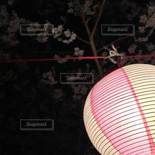 夜桜の写真・画像素材[1793606]
