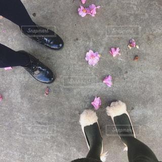 花と足元の写真・画像素材[1800617]