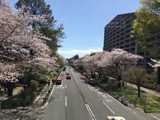 自然,空,建物,花,春,桜,木,道路,花見,お花見,道,イベント,さくら