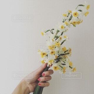 女性,花,花束,手,手持ち,人物,水仙,ポートレート,ライフスタイル,手元