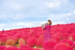 女性,犬,自然,風景,秋,動物,チワワ,赤,綺麗,ペット,わんこ,コキア,red,国営ひたち海浜公園,茨城県,私,みはらしの丘,親子写真