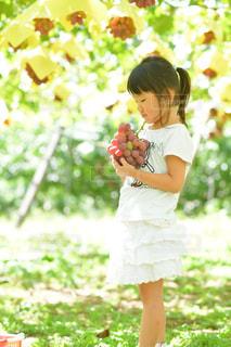 子ども,緑,紫,女の子,少女,フルーツ,くだもの,果実,葡萄,山梨,ぶどう狩り,マスカット,ぶどう,grapes