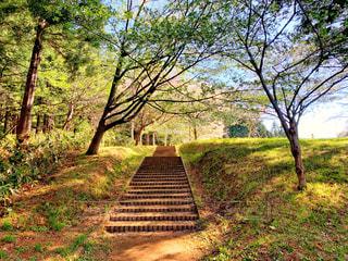 公園の階段の写真・画像素材[2147013]