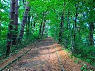 森の中の写真・画像素材[2246807]