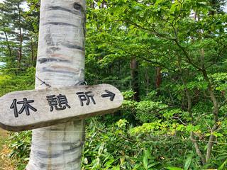 森の中の案内板の写真・画像素材[2246809]