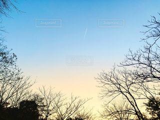 空と樹木の写真・画像素材[2982640]