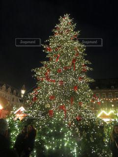 夜ライトアップされたクリスマス ツリーの写真・画像素材[1779485]