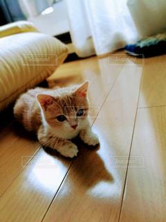 テーブルの上に座ってオレンジと白猫の写真・画像素材[1793226]