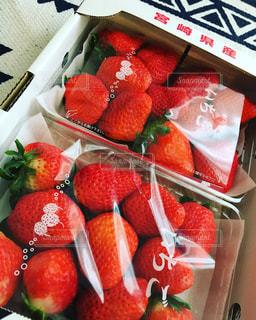 食べ物,フルーツ,果物,新鮮,フレッシュ,イチゴ,宮崎産,ジュウシー