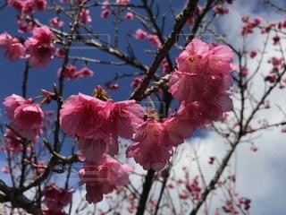 奄美の春の写真・画像素材[1793594]
