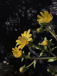 花,黄色,虫,チョウ,草木